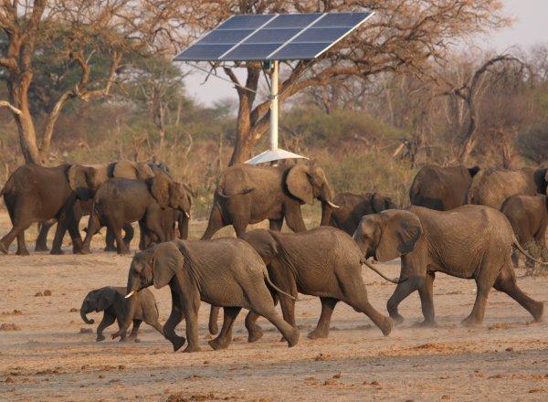 Zimbabve'de 200 fil, kuraklık yüzünden öldü